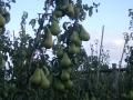 boomgaard-10-jpg
