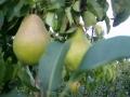boomgaard-11-jpg