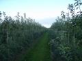 boomgaard-4-jpg