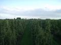boomgaard-5-jpg