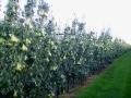 boomgaard-7-jpg